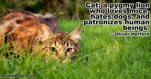 cat-quote-15