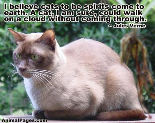 cat-quote-16