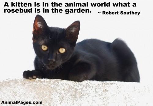 cat-quote-08