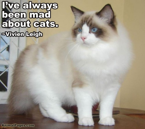 cat-quote-10