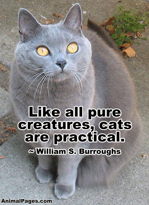 cat-quote-13