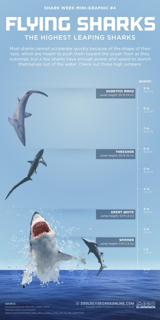 flying-sharks-infographic