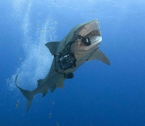 shark-camera