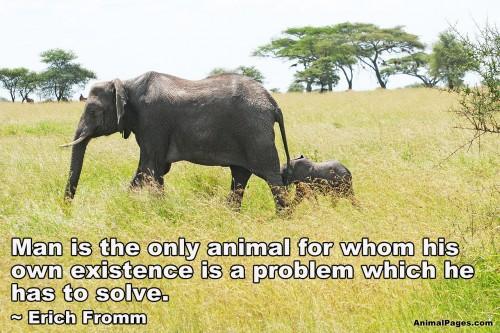 animal-quote-10