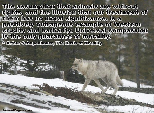 are animals part of our moral This was in part because of the and it makes no sense to spread them beyond our own species he accuses animal rights advocates animal rights and moral.