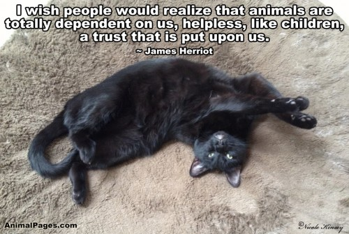 Animal Quotes, Part 4 | AnimalPages