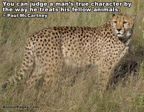 animal-quote-16