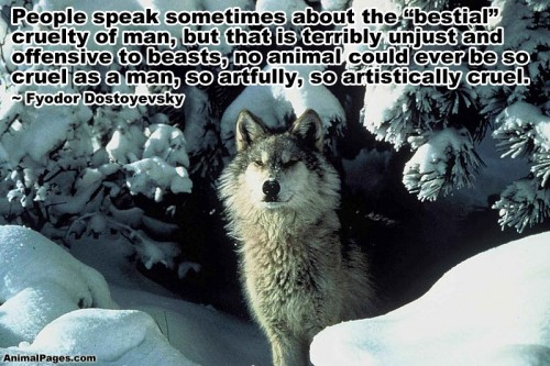 Animals Quotes Prepossessing Animal Quotes Part 4  Animalpages