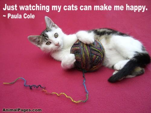 cat-quote-06