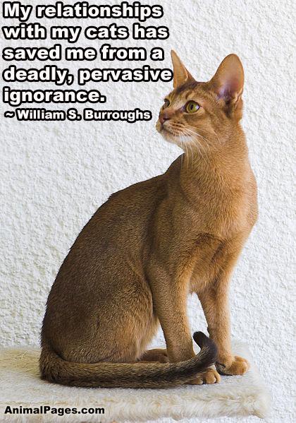 cat-quote-07
