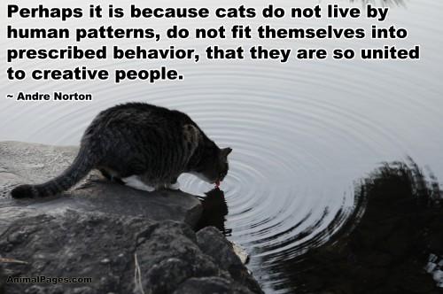 cat-quote-23