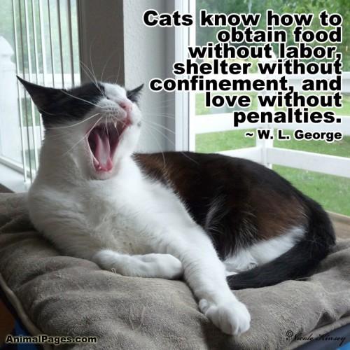 cat-quote-24