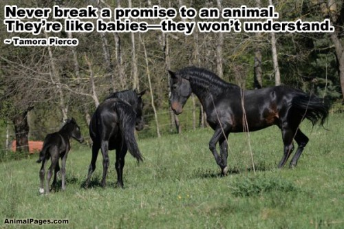 Animals Quotes Custom Animal Quotes Part 7  Animalpages