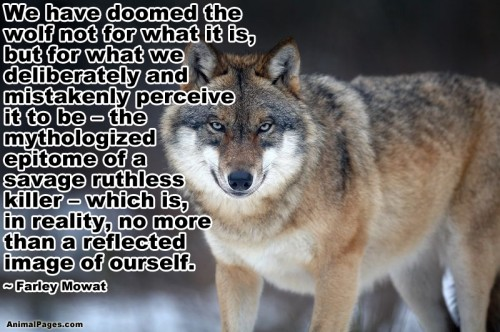 animal-quotes-01