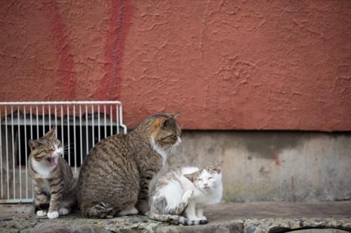 cat island 01