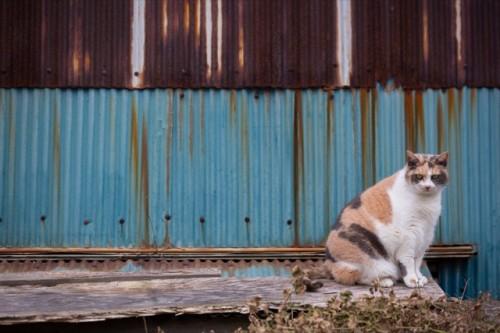 cat island 07