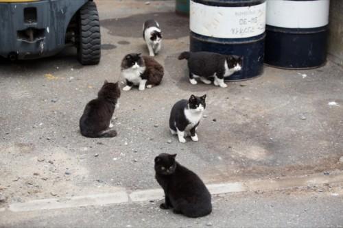 cat island 09