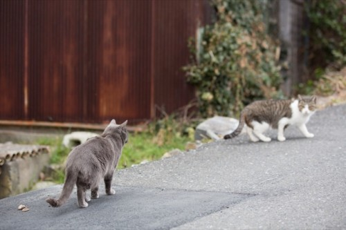 cat island 18