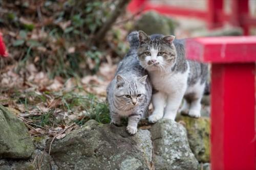 cat island 21
