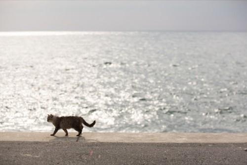 cat island 25