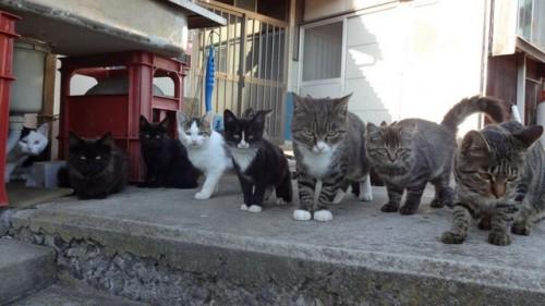 cat island 32