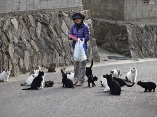 cat island 34