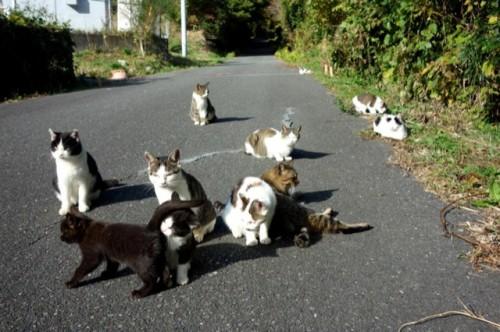 cat island 35