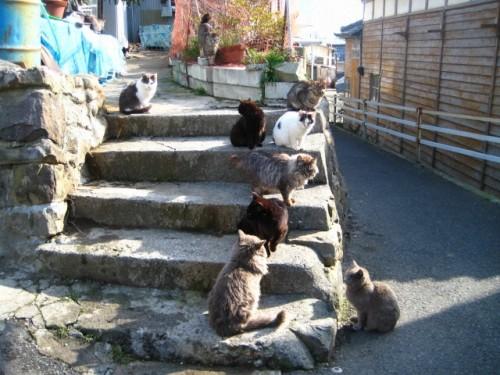 cat island 36