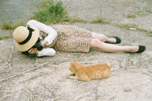 cat island 37