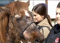 dixie the horse rescued from pool