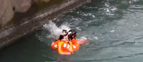Johan Skärkarl swims to shore with the rescued cat on his stomach.