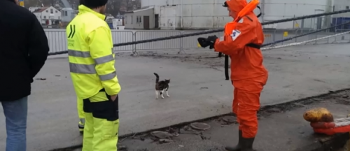 Once ashore the cat stayed near the rescuers. They hope this video will help locate the cat's guardians.