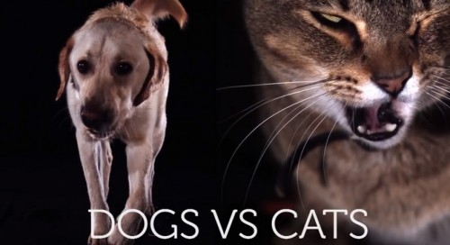 dogs-vs-cats-drinking