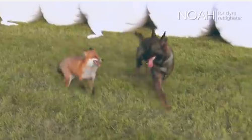 fox-and-dog