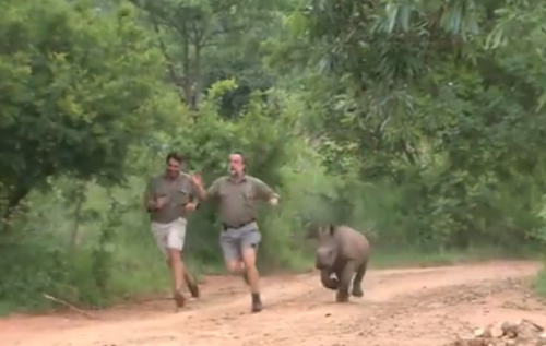 running with rhinos.jpg