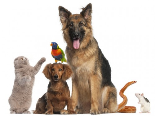 which pet