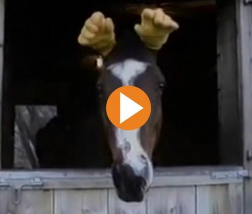 horse-glove-ears