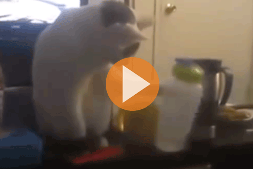 funny-cats-knocking-shit-over-play-video