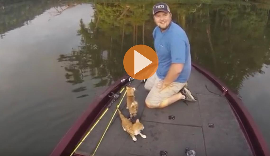 catfishing-hero