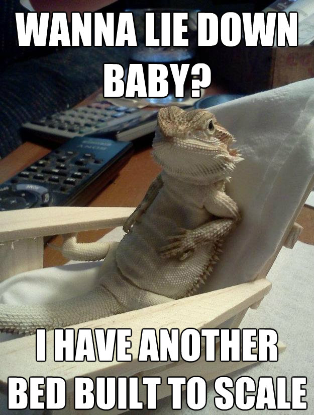 30 Bearded Dragon Memes To Make You Smile Animalpages