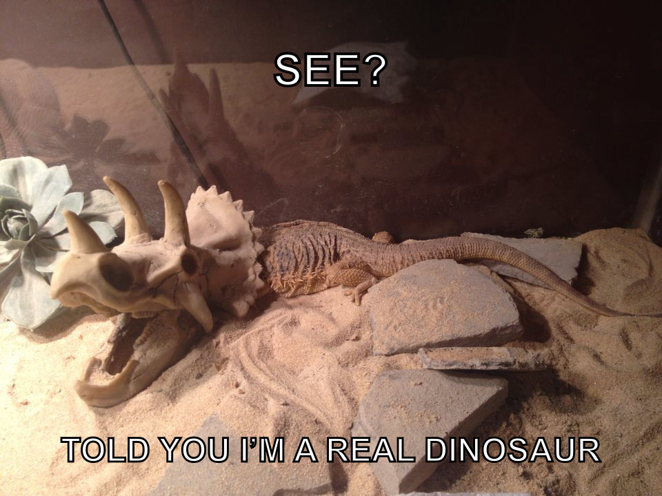 bearded-dragon-dino-2