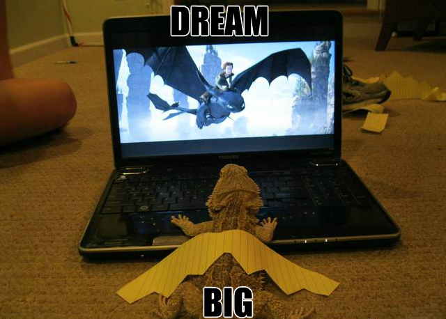 bearded-dragon-dream