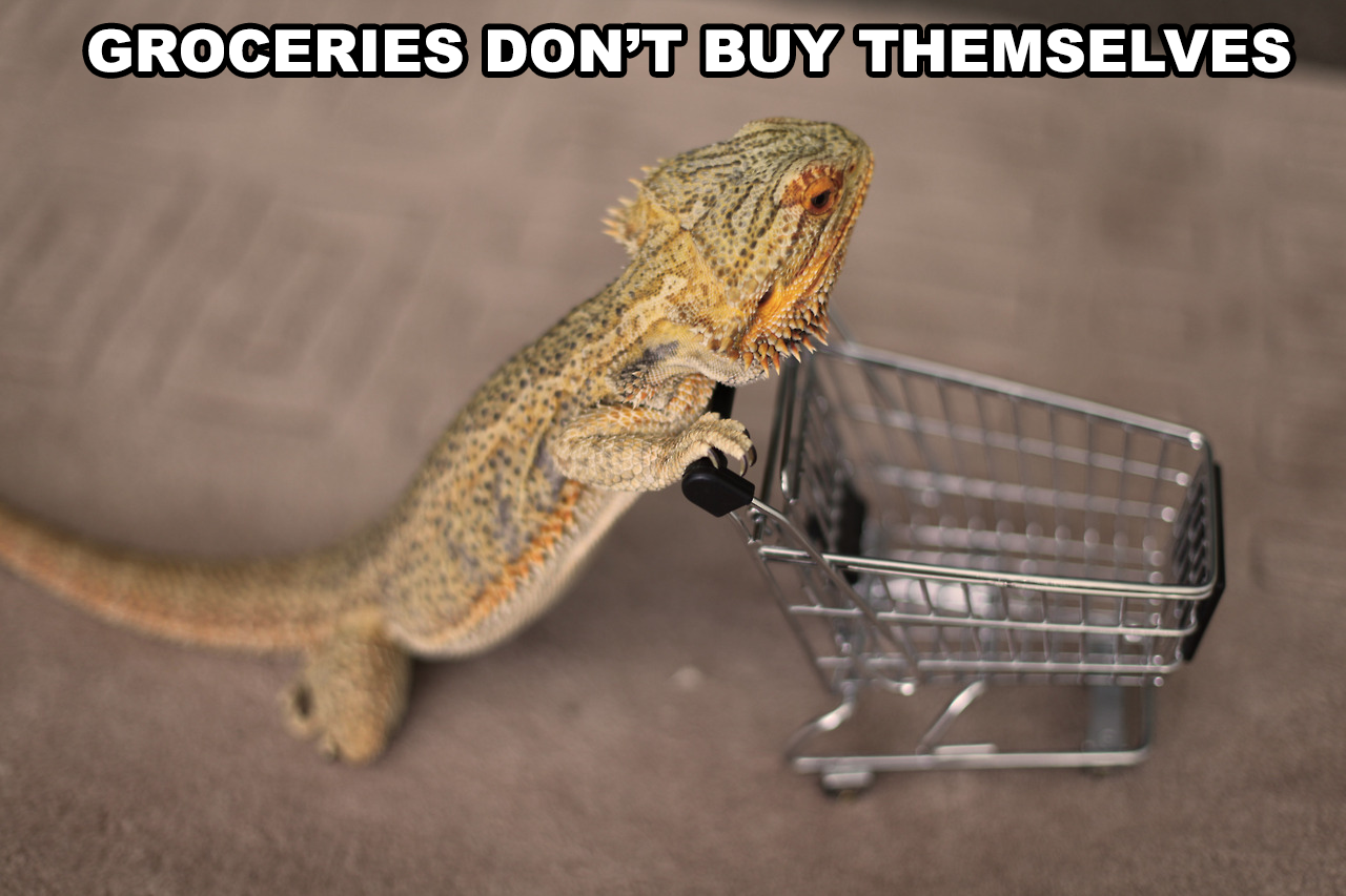 bearded-dragon-groceries
