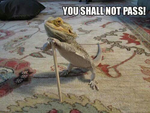 bearded-dragon-shallnotpass