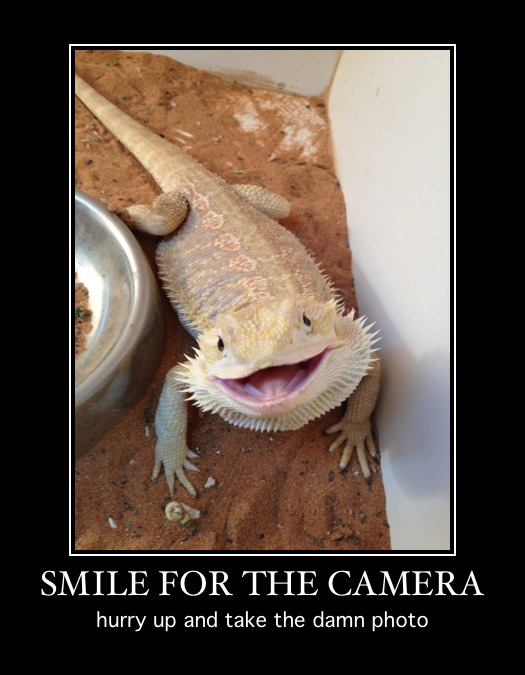 bearded-dragon-smile