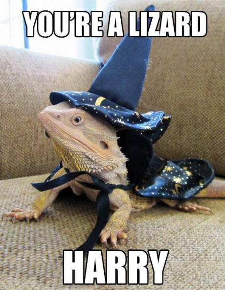 bearded-dragon-wizard