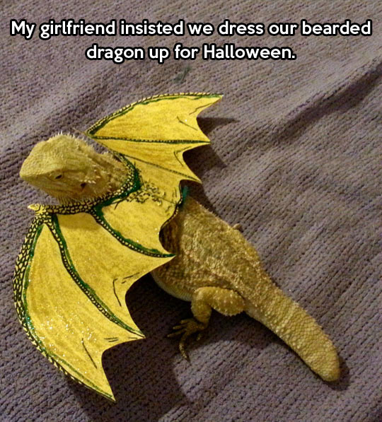 bearded-dragon-yellow